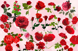 Huge Awesome Roses png Collection new 2015 free for Designing