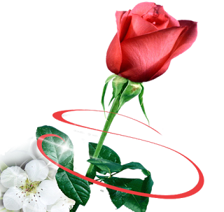 Beautiful RosesFor Adobephoto Shop